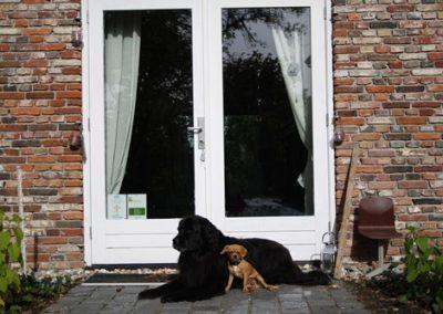 Honden bij praktijk Rekken